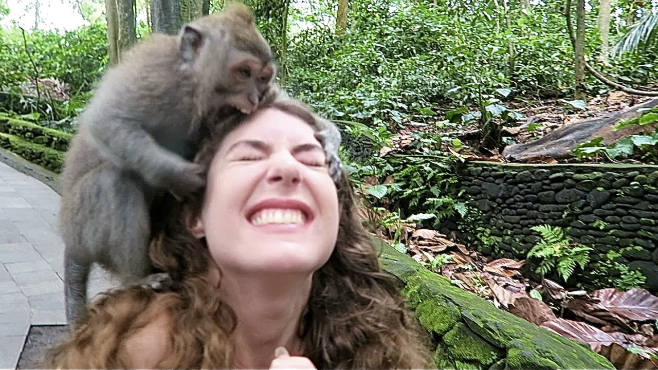 Attacked by Monkeys!