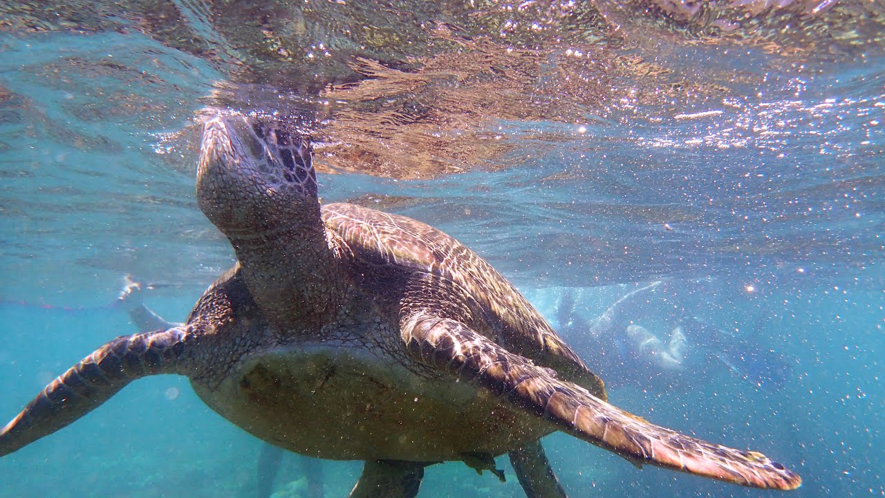 DIVING WITH SEA TURTLES IN APO ISLAND