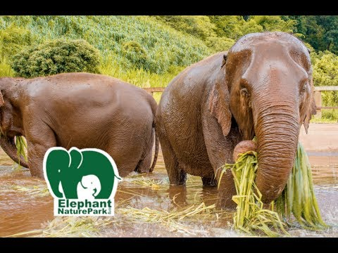 Elephant Nature Park Chiang Mai Thailand – Single Day Visit | Travel Vlog Ep. 27