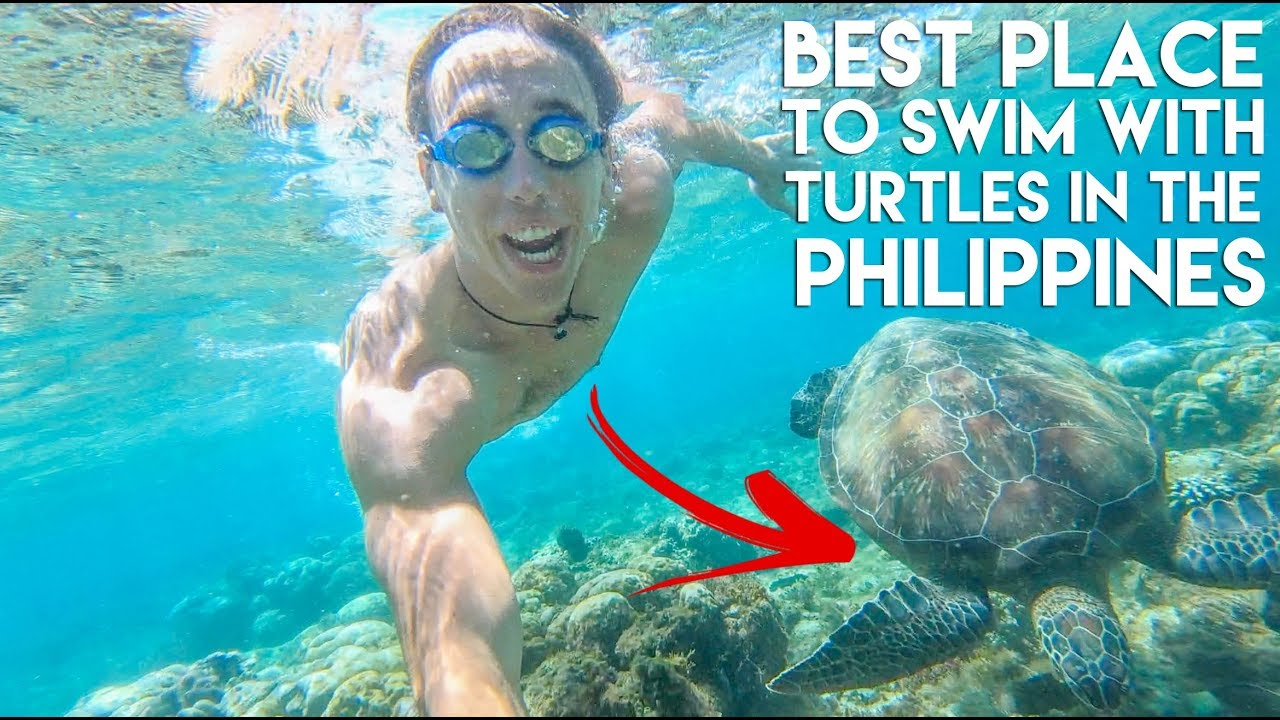 TURTLES and Beautiful Viewpoints at APO ISLAND – Philippines Travel Vlog Ep 14